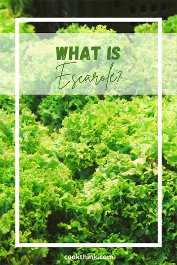 What Is Escarole?_1