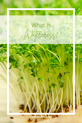 What Is Watercress?_1