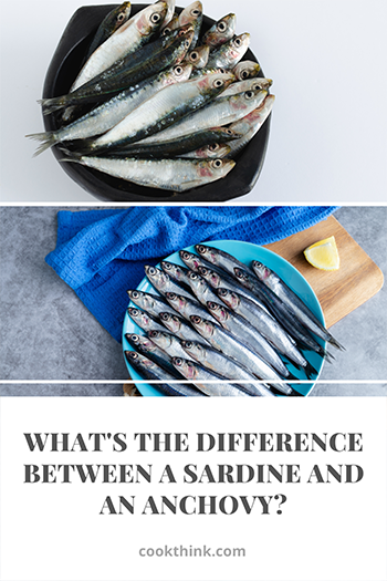 What's The Difference Between A Sardine and An Anchovy?_4