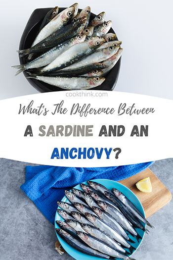 What's The Difference Between A Sardine and An Anchovy?_6