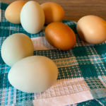 Fresh Eggs On Cloth