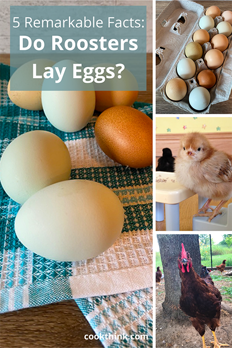 Do Roosters Lay Eggs? Pinterest Image