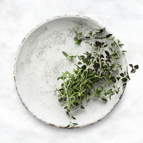 Sprig of thyme on a white plate