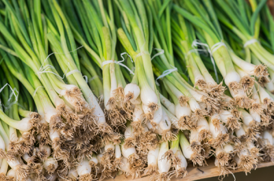 regrow onions